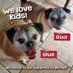 Bud & Blue